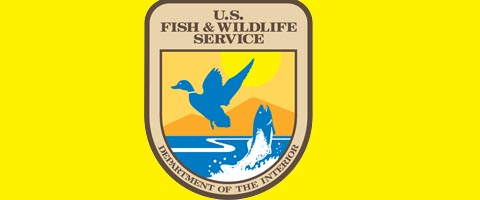 Fish service vi